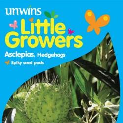 Asclepias Hedgehog Seeds