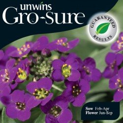 Alyssum Alice Purple Seeds (Gro-sure)