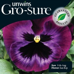 Pansy Colossus Neon Violet Seeds (Gro-sure)