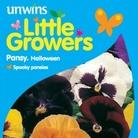 Pansy Halloween Seeds