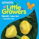Squash Patty Pan Yellow Seeds