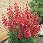 Autumn Plants-Prairie Mallow Collection - 6