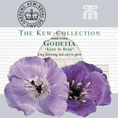 Kew Collection - Godetia Lady In Blue Seeds