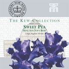 Kew Seed Collection - Sweet Pea King Size Navy Blue