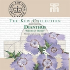 Kew Seed Collection - Dianthus Siberian Blues