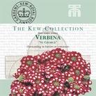Kew Collection - Verbena St George Seeds