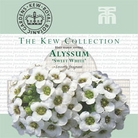 Kew Seed Collection - Alyssum Maritima Procumbens Sweet White