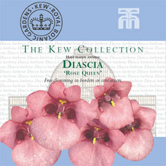 Kew Seed Collection - Diascia Rose Queen