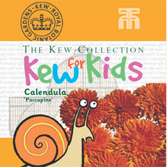 Kew Seeds for Kids - Calendula Porcupine