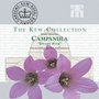 Kew Seed Collection - Campanula Lactiflora Dwarf Pink