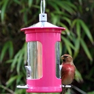 Chapelwood Seed Feeder Pink Support Breakthrough Breast Cancer