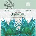 Kew Collection - Eryngium Miss Wilmot TS Ghost Seeds