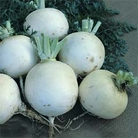 Vegetable Seeds-Turnip Snowball