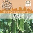 Urban Seed Collection - Pea Sugar Snow Green