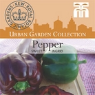 Urban Seed Collection - Pepper Sweet Ingrid