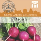 Urban Seed Collection - Radish Amethyst