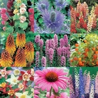 Autumn Plants-Bargain Perennial Collection - 40 Bareroot Plants