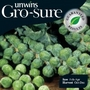 Brussels Sprouts Maximus Seeds (Gro-sure)