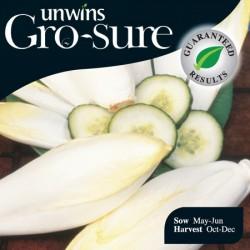 Chicory Totem Seeds (Gro-sure)