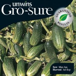 Gherkin Bimboster Seeds (Gro-sure)