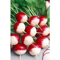 Radish 'Sparkler 3' x 1000 seeds