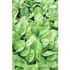 Spinach Emilia F1 x 300 seeds