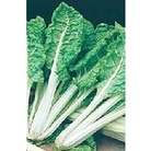 Chard 'White Silver 2' x 350 seeds