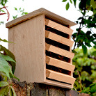 Lacewing box