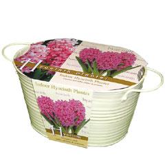 Oval Hyacinth Planter