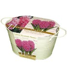 Oval Hyacinth Planter