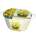 Autumn Bulbs-Oval Tete a Tete Planter