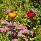 Colour Cup Bird Feeder