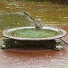 Echoes Glazed Bird Bath