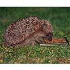 Hedgehog Snack Bowl