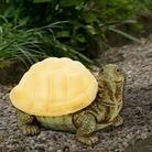 Tortoise Solar Light
