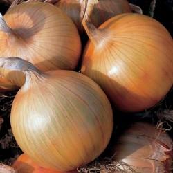 Heat Prepared Onion Duo Pack
