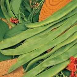 Runner Bean Enorma Plants x12