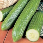 Cucumber Burpless Tasty Green Plants x3