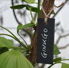 Small plant labels