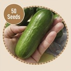 Cucumber Beit Alpha F1 20 Seeds