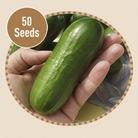 Cucumber Beit Alpha F1 20 Seeds