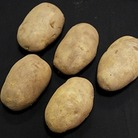 Arran Pilot Seed Potatoes (1kg)