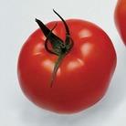Tomato Supremo Beef Red 1 Plant