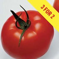 Tomato Supremo Beef Red 3 Plants 9cm Pot