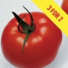 Tomato Supremo Beef Red 3 Plants 9cm Pot