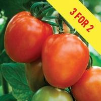 Tomato Supremo Plum Red 3 Plants 9cm Pot