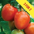 Tomato Supremo Plum Red 3 Plants 9cm Pot