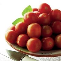 Tomato Gardeners Delight 6 Jumbo Ready Plants