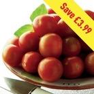 Tomato Gardeners Delight 12 Jumbo Ready Plants