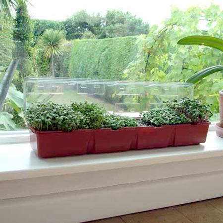 Windowsill Seed Kit - Salads